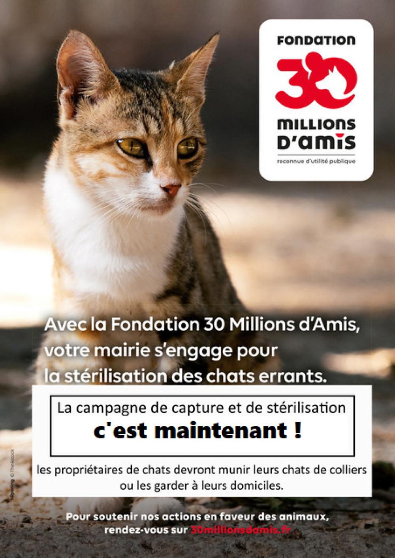 Top départ de la campagne de stérilisation des chats errants